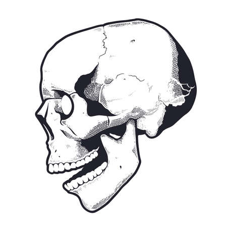Engraving Style Skull With Open Mouth. Black and white vector illustration of skull side view. Vector object isolated on white. Illustration