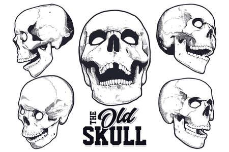 Set of monochrome engraving style skulls isolated on white background. Illustration