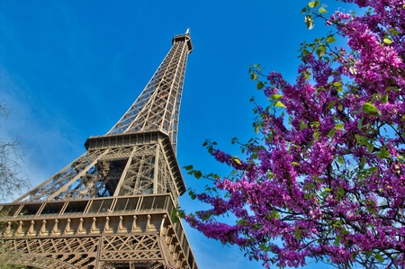 trocadero: Eiffel Tower in Paris France with cherries and blue sky Stock Photo