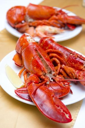 大新鮮的龍蝦在白盤FOT晚餐,海鮮