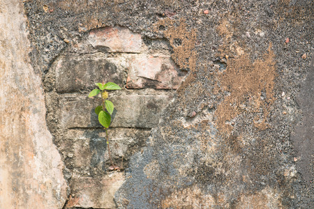 broken through: Tree growth through old wall, cement