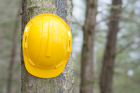 yellow hard hat: yellow hard hat on the tree, construction