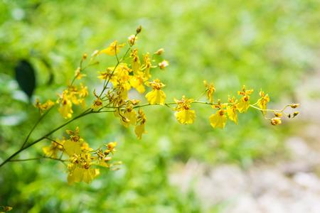 orquideas amarillas orquídeas amarillas beautiul en el jardín, flor