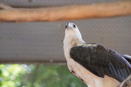 rare animals: white falcon hold on perch in zoo