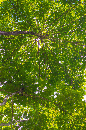 tall tree: under the tall tree beautiful leaves, nature Stock Photo