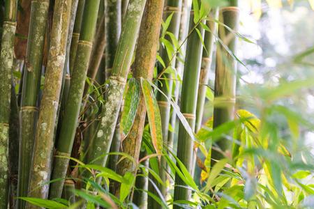 新鮮的竹林花園 版權商用圖片