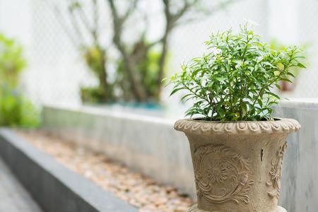 jessamine: piccola pianta in un laghetto di cemento, jessamine arancione Archivio Fotografico