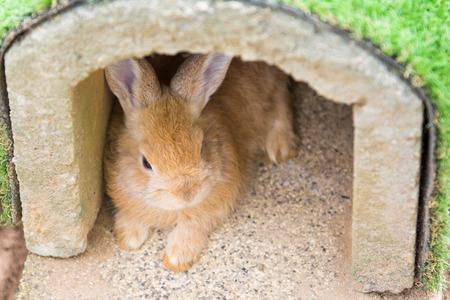 house pet: little rabbit lying in a rabbit house, pet