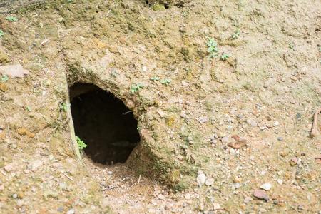 Rabbit Hole in het bos, thuis