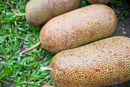integer: ripe artocarpus integer from garden, fruit Stock Photo
