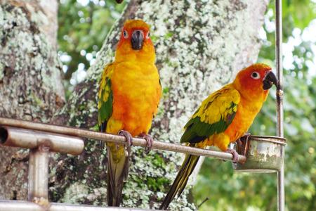 talon: beautiful colorful parrot in the garden, bird