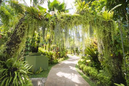 botanic: walkway in the shady botanic garden, nature