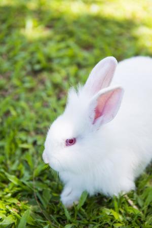 wit konijn: white rabbit on the grass in garden, animal