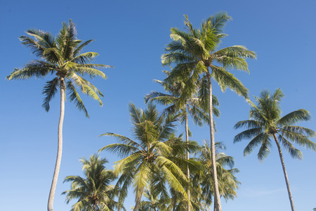 against: coconut trees against blue sky, nature