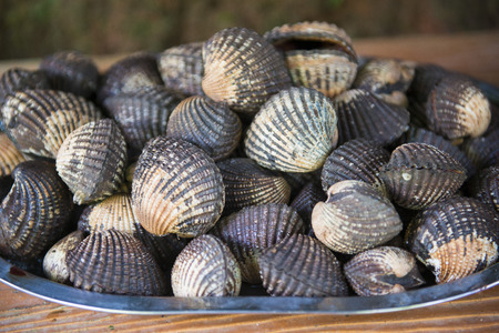 cockles: fresh cockles for sale at the market, shellfish