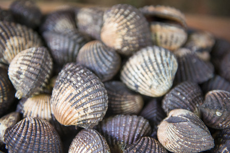 bivalve: fresh cockles for sale at the market, shellfish