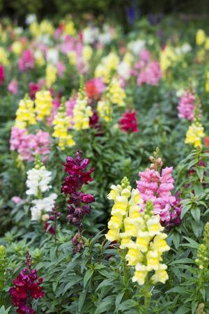 botanical farms: beautiful flower in garden, flora Stock Photo