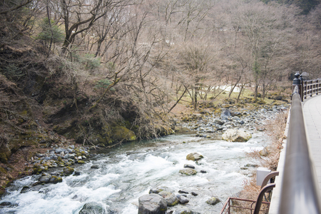 riverside tree: water of stream flows through between the stones, natural Stock Photo