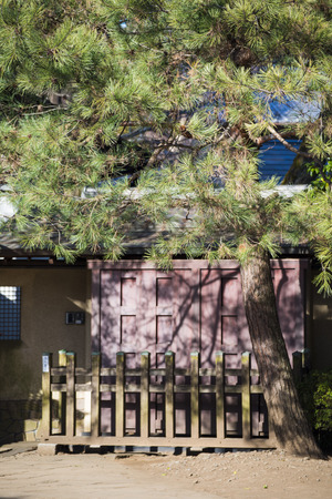 asian house plants: wooden fence and big tree in home, house