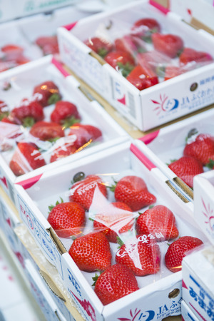 limp: Japan - February 24, 2016 :: big fresh strawberry from farm in Japan Editorial