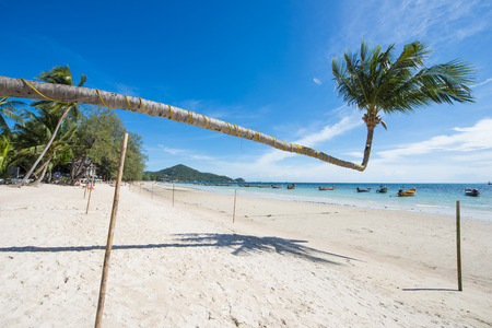 tilted: tilted coconut tree landmark of Tao island in Thailand, beach Stock Photo