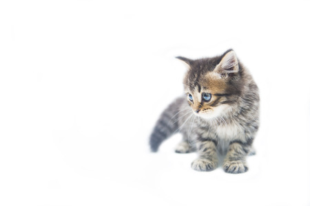 cute little tabby kitten on white background, baby cat Stock Photo