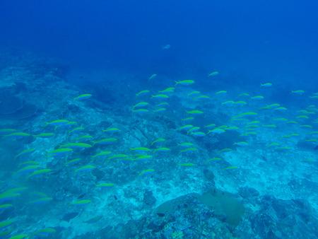 Fish underwater at Similan Marine National park, Phang-nga, Thailand Stock Photo