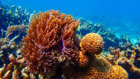 Beautiful coral reef in underwater, marine  版權商用圖片