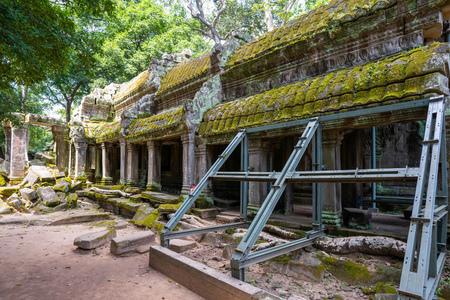 ruins and tetrameles at Ta Prohm temple,Angkor Thom