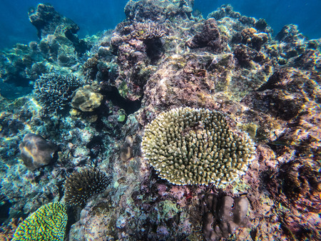 beautiful coral in diving spot Surin island,Thailand