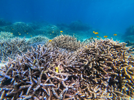beautiful coral in diving spot at Boulder island,Myanmar Stock Photo