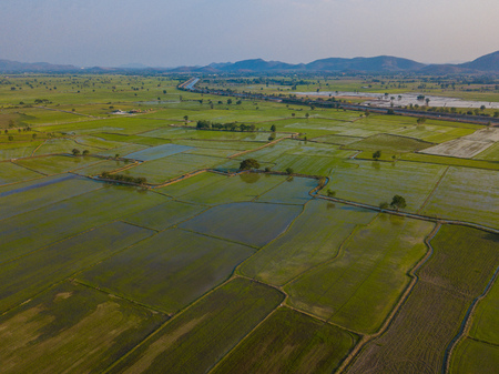 green rice field in the evening,field 免版税图像