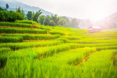 beautiful rice field terrace at Chiang Mai,Thailand Zdjęcie Seryjne