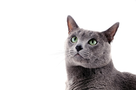 Portrait of a beautiful cat on a white background