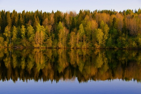 Russian north. Beautiful spring wood is reflected in the river