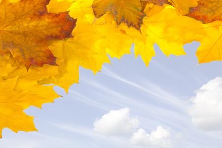 Autumn  Colorful fall maple leaves photo