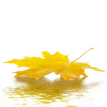Kleurrijke herfst esdoorn bladeren op wit wordt geïsoleerd