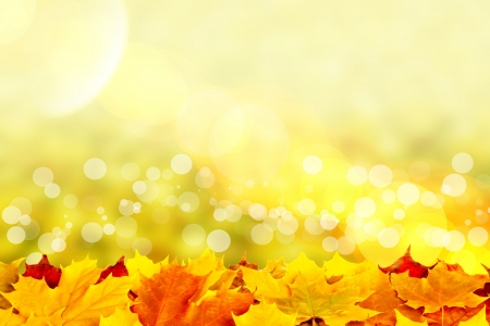 Beautiful autumn background with maple leaves Stock Photo