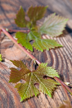 Grapes leaves against old wooden planks photo