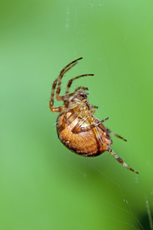 crawly: The poisonous spider sits in a web Stock Photo
