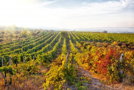 A wine vineyard in France  HDR image photo