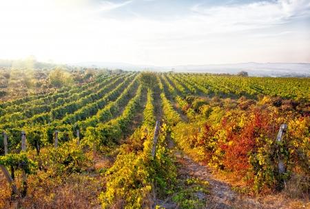 A wine vineyard in France  HDR image Banque d'images