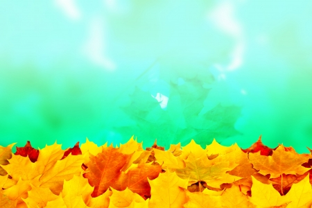 Colorful fall maple leaves isolated on white photo