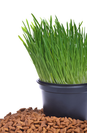 Pot of fresh green grass and dry food for cats photo