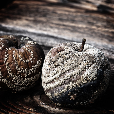 penicillium: Rotten apple against old wooden planks with a retro effect Stock Photo