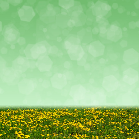 Dandelion field and abstract bokeh lights background photo