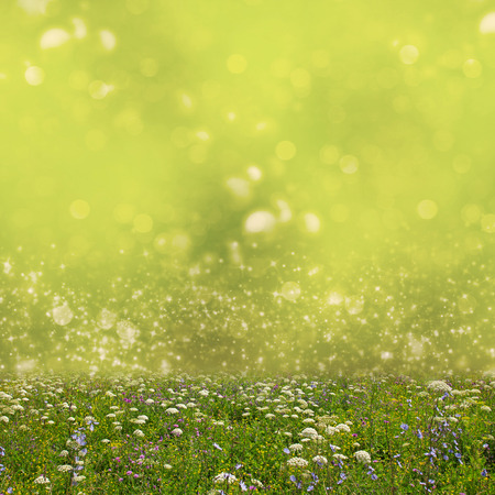 Wildflower meadow and abstract bokeh lights background photo