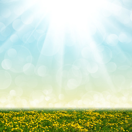 Dandelion field and abstract bokeh lights background Stock Photo