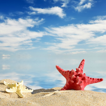 starfish beach: Aquatic background.Color starfishes on sandy beach, travel concept