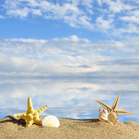 star fish: Sea shells and star fish with sand Stock Photo